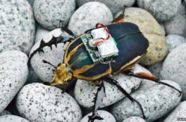 Khoa học điều khiển được từ xa côn trùng biết bay!