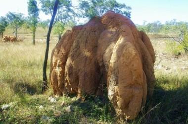 Mối, côn trùng giúp chống sa mạc hóa và biến đổi khí hậu