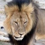 Điều tra nha sĩ Mỹ Walter Palmer bắn chết sư tử Cecil ở Zimbabwe