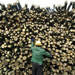 5 Người Việt khai thác gỗ lậu bị bắt ở Đài Loan