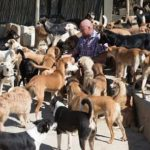 Karl Scarr ở Morocco sống cùng 150 con Chó bị bỏ rơi