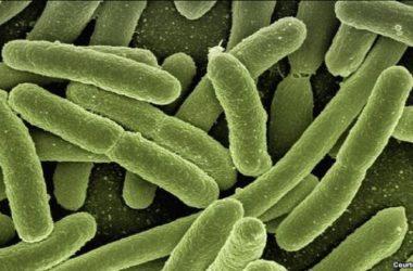 Khoa học gia Mỹ lo ngại những loại siêu vi khuẩn bất trị mới