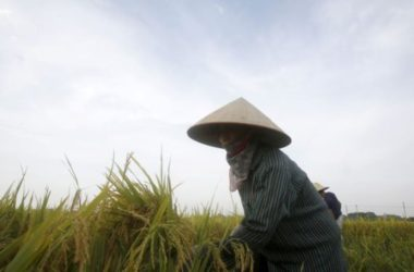 Tết đến mà 12 tỉnh Việt Nam xin gạo cứu đói