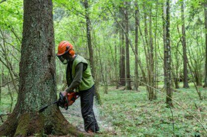 Pháp ngừng nhập 7 loại hàng để chống nạn phá rừng
