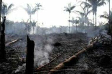 TT Brazil cáo buộc TT Pháp xâm phạm chủ quyền vụ cháy rừng Amazon