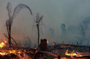 Các nước vùng Amazon ký hiệp định bảo vệ rừng