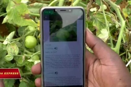 Ứng dụng di động giúp nông dân châu Phi chống sâu bệnh