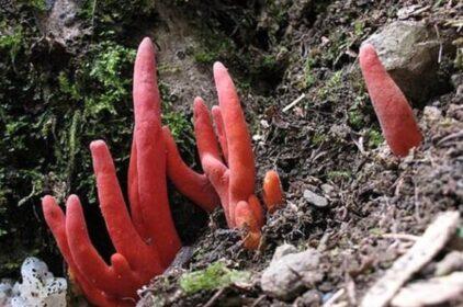 Thực vật cực độc và nguy hiểm