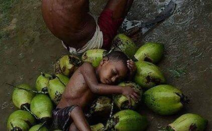 Bao nhiêu tiền 1 trái dừa vậy ông?