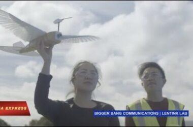 Robot đầu tiên bay lượn như chim bồ câu