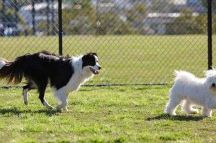 VICTORIA sẽ xây thêm 17 công viên cho chó cưng