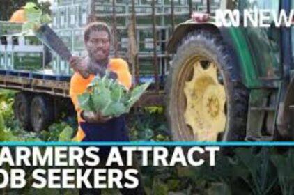 Các hạn chế Covid19 khiến 26,000 công việc hái trái cây đang cần người